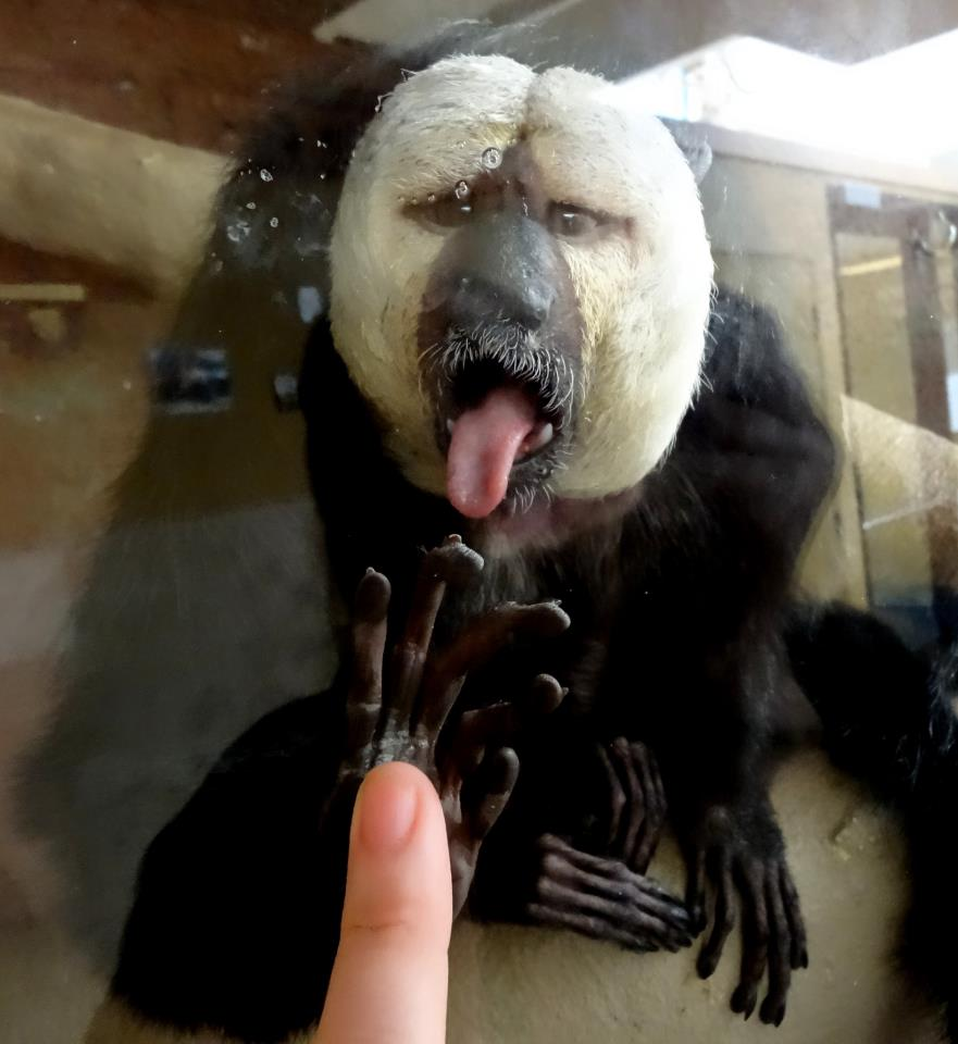Bigfoot team uses telepathy - Telepathic Communication with a White-faced Saki Monkey