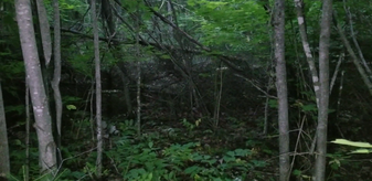SheSquatchers - All Female Bigfoot Team used Remote Viewing to find this location & found an intricate stick structure there - Jen Kruse - SheSquatchers.com